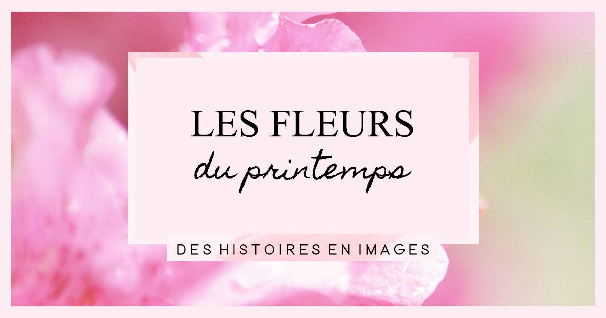 Des histoires en images : Les fleurs du printemps